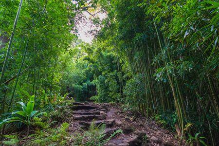 Foresta di bambù lungo il sentiero Pipiwai al Parco Nazionale di Haleakala sull'isola hawaiana di Maui, USA