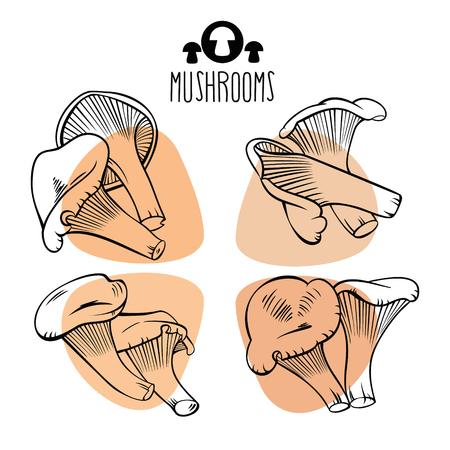 Small yellow edible mushroom.Vector set
