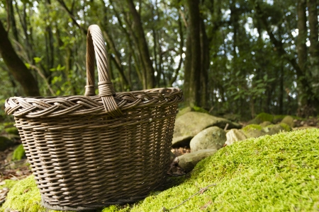 fungoid: Basket with mushrooms on the rock