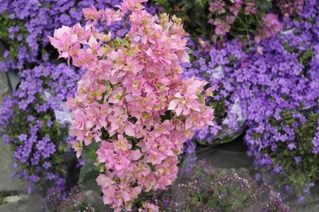 giardino: Fiori