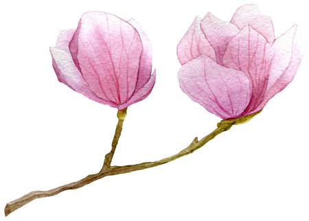 spring background with watercolor branch of magnolia .hand drawn botanical illustration Stock Photo