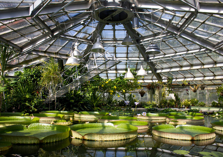 Aquatic garden in the sunligt with different species of water plant. Water lilies,Victoria Amazonica,Water Hyacinth. Stock Photo