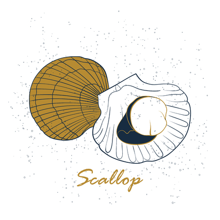 Scallop logo. Hand drawn vector illustration isolated on white background. Seafood, fish market label, infographics, food packaging or underwater sea animal themes design.