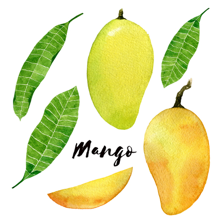Mango set. Had drawn mango fruit watercolor illustration. Yellow mango with leaves and slice isolated on white background.