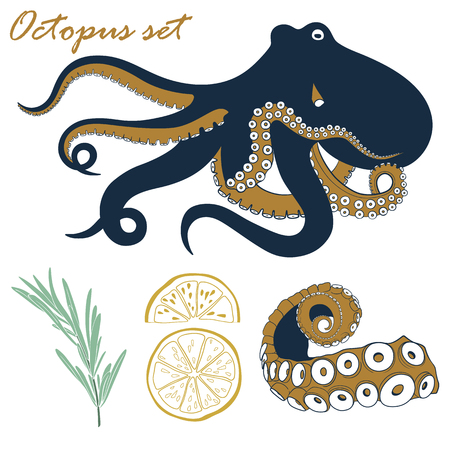 Vector octopus set. Seafood hand drawn illustration with octopus, tentacle, lemon and rosemary.