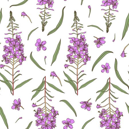 Willow herb seamless pattern. Hand drawn botanical vector illustration for packaging, textile print, wallpaper, wrapping paper.