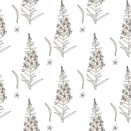 Willow herb seamless pattern. Outline hand drawn botanical vector illustration for packaging, textile print, wallpaper, wrapping paper.