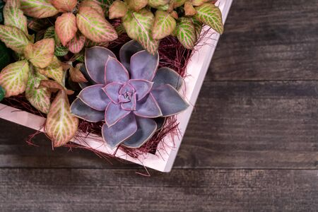 Close up view of floral arrangements with succulent on wooden background. Flat lay and copy space. Reklamní fotografie - 133067169