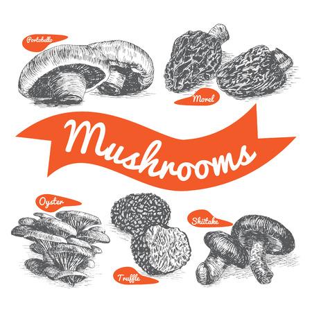 morel: illustrated Set # 1 of Mushrooms. Illustrative sorts of mushrooms Illustration