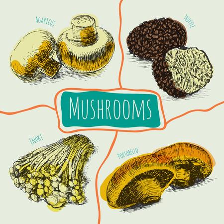 sorts: Illustrative colorful sorts of mushrooms