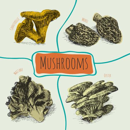 morel: Illustrative colorful sorts of mushrooms