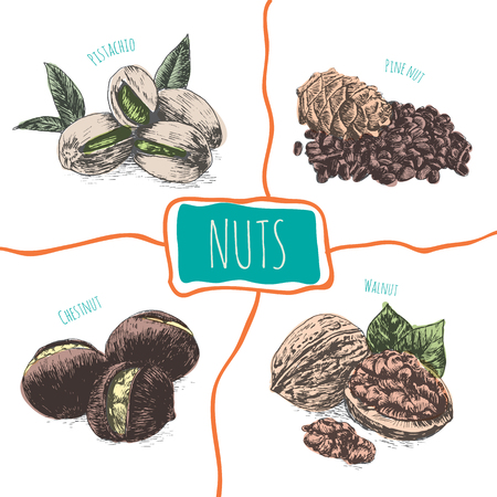 brazil nut: Vector illustration colorful set with nuts. Different sort of nuts on white background Illustration