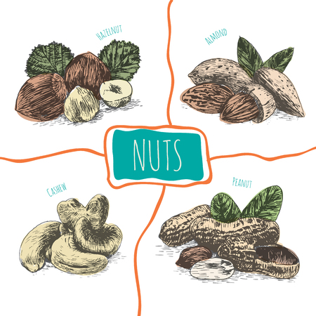 mixed nuts: Vector illustration colorful set with nuts. Different sort of nuts on white background Illustration