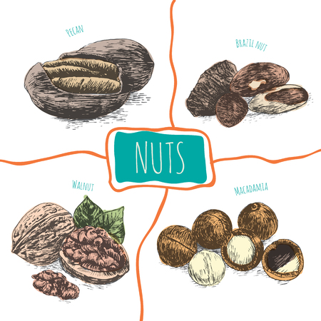 Vector illustration colorful set with nuts. Different sort of nuts on white background Illustration