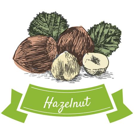sorts: Vector colorful illustration of hazalnut. Illustrative sorts of nuts