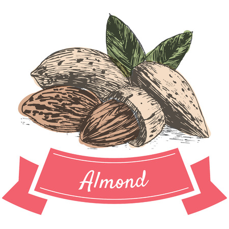 sorts: Vector colorful illustration of almond nuts. Illustrative sorts of nuts
