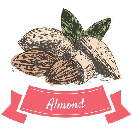 Vector kleurrijke illustratie van amandel noten. Illustratief soorten noten