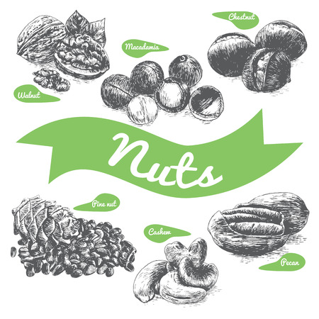 brazil nut: Vector illustration black and white set with nuts. Different sort of nuts on white background