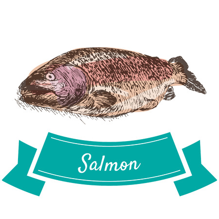 Vector illustration colorful set with salmon. Illustration sort of seafood Illustration