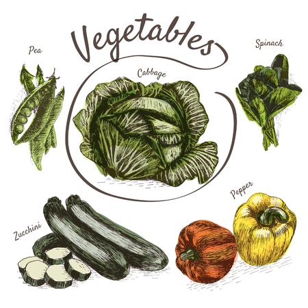 Vector illustration colorful set with vegetables. Different sort of vegetables on white background Illustration