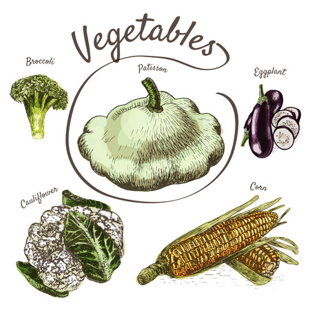cauliflower: Vector illustration colorful set with vegetables. Different sort of vegetables on white background Illustration