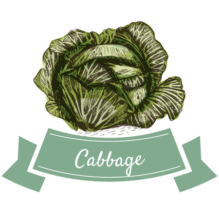 Vector illustration colorful set with cabbage. Illustration sorts of vegetables on white background