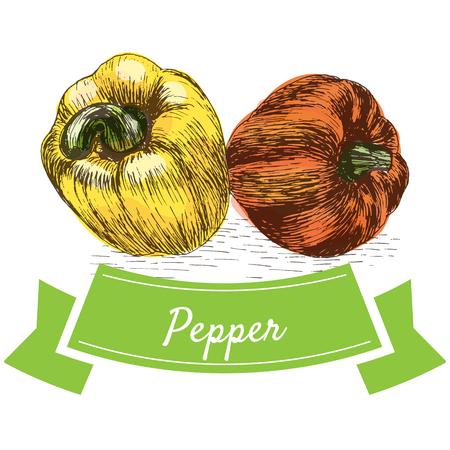 Vector illustration colorful set with pepper. Illustration sorts of vegetables on white background