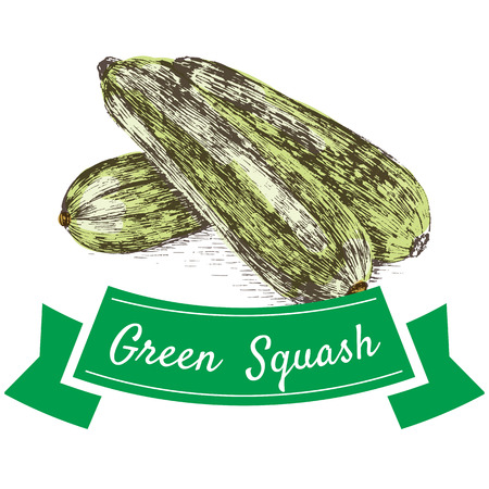 courgette: Vector illustration colorful set with green squash. Illustration sorts of vegetables on white background Illustration