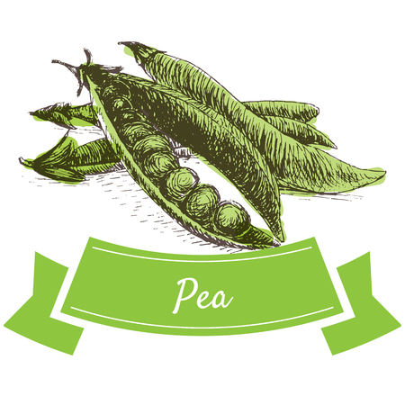 pea pod: Vector illustration colorful set with pea. Illustration sorts of vegetables on white background Illustration