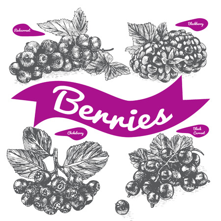 chokeberry: Vector illustration black and white set with berries. Various of berries on white background