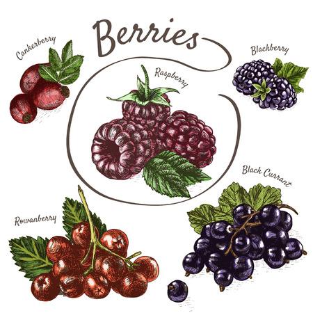 Vektor-Illustration bunte Reihe mit Beeren. Vaus Arten von Beeren auf weißem Hintergrund