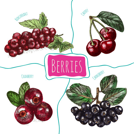 arandanos rojos: Vector illustration colorful set with berries. Various kinds of berries on white background