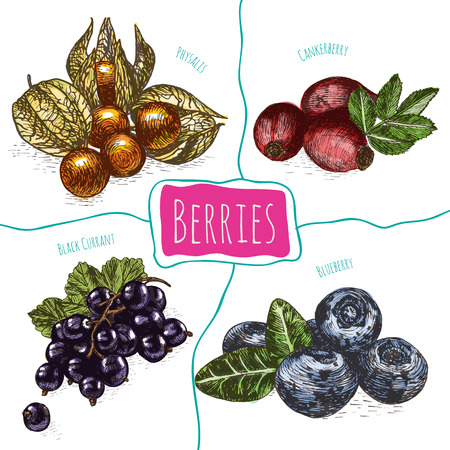 Vector illustration colorful set with berries. Various kinds of berries on white background Фото со стока - 61912649