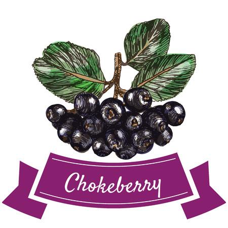 chokeberry: Vector illustration colorful set with chokeberry. Illustration various of vegetables on white background