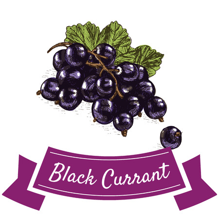 Vector illustration colorful set with black currant. Illustration various of vegetables on white background