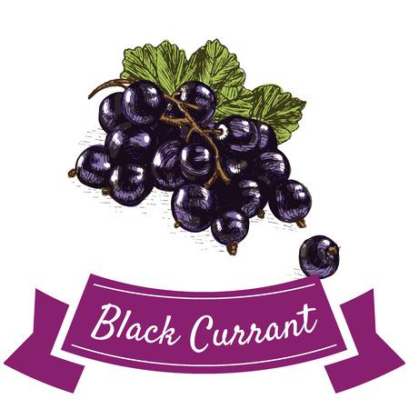 Vektor-Illustration bunte Reihe mit schwarzen Johannisbeeren. Illustration vaus von Gemüse auf weißem Hintergrund