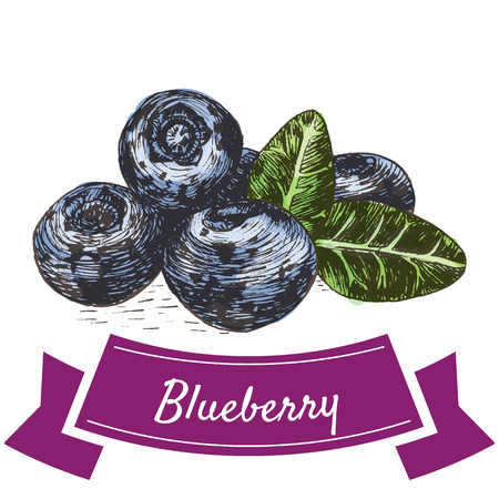 Vector illustration colorful set with blueberry. Illustration various of vegetables on white background