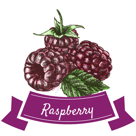 curative: Vector illustration colorful set with raspberry. Illustration various of vegetables on white background Illustration