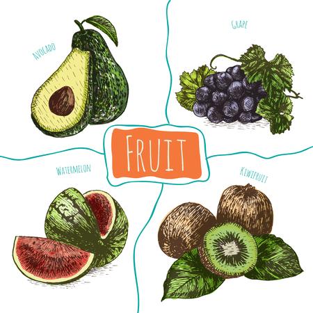 Vector illustration set coloré avec des fruits. Différent sorte de fruits sur fond blanc Banque d'images - 61912698