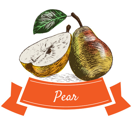 fruitage: Vector illustration colorful set with pear. Illustration of fruits