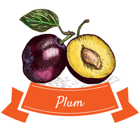 Vector illustration colorful set with plum. Illustration of fruits Illustration