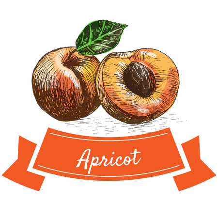 Vector illustration colorful set with apricot. Illustration of fruits Illustration