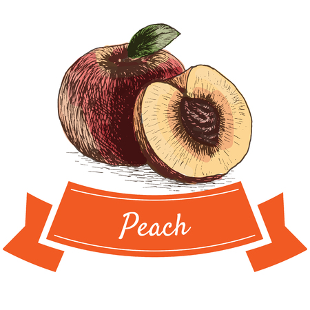 garden stuff: Vector illustration colorful set with peach. Illustration of fruits