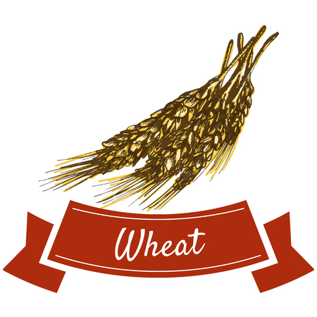 Wheat illustration. Vector colorful illustration of wheat.