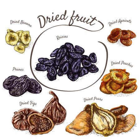 frutas deshidratadas: Las frutas secas colorida ilustración. Vector la ilustración de colores de las frutas secas