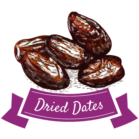 Dried dates colorful illustration. Vector illustration of dried dates.