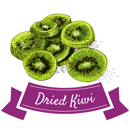 sliced: Dried kiwi colorful illustration. Vector illustration of dried kiwi.