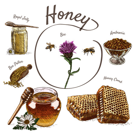 Royal jelly, bee pollen, honey comb, ambrosia and honey colorful illustration. Vector colorful illustration of honey Illustration