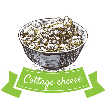 cottage cheese: Cottage cheese colorful illustration. Vector illustration of breakfast. Illustration