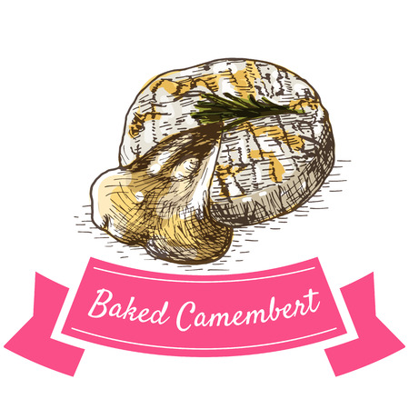Baked Camembert colorful illustration. Vector illustration of French cuisine.